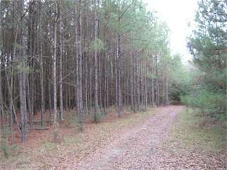 Jayess, Pike County, Mississippi Land For Sale - 140 Acres