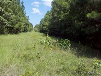 Simsboro, Bienville Parish, Louisiana Land For Sale - 40 Acres