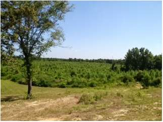 Magnolia, Amite County, Mississippi Land For Sale - 158 Acres