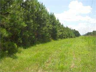 Clinton, Hinds County, Mississippi Land For Sale - 279 Acres