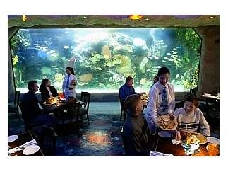 State Inspection Coupon >> Downtown Aquarium | Houston Events at khou.com